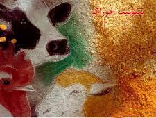 تولید فله پودر میکرونیزه